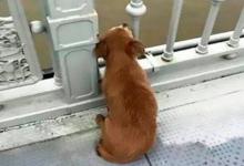 Photo of Perro permaneció en espera durante 4 días en un puente donde su amo se había quitado la vida